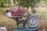 Quả xoài nặng nhất thế giới ở Colombia: Nặng hơn 4 kg