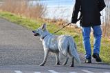 Đưa tin về vụ trộm chó, PV tình cờ bắt gặp nghi phạm dắt chó đi dạo