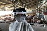 Kính thông minh giúp nông dân không cần cân vẫn biết trọng lượng của lợn