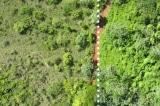 vỏ cam khôi phục rừng nhiệt đới