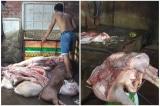 Đồng Nai: Phát hiện gần 1 tấn thịt heo bệnh, heo chết chuẩn bị đi tiêu thụ