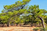 """""""Vét"""" rừng làm sân golf và bản thỉnh nguyện thư hơn 16.000 chữ ký"""