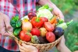 trồng thực phẩm, làm vườn, khu vườn