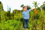 hạt giống, làm vườn
