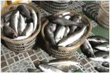 44 tấn cá chết ở Thanh Hóa: Người dân phát hiện nước chuyển đen, bốc mùi hôi thối