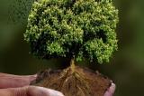cứu cây