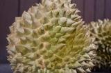 Trái sầu riêng đặc biệt khiến bộ trưởng Malaysia cũng phải chú ý