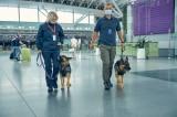UAE: Chó nghiệp vụ phát hiện người nhiễm COVID-19 với độ chính xác 98,2%