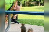 Thú vị chú sóc say mê nghe nhạc saxophone ở công viên (video)